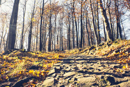 Thin road built from basalt stones to top of volcano hill, autumn forest around