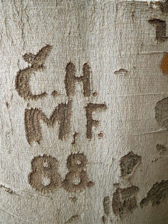Words and numbers carved in a beech tree bark. Heritage sine year 88.