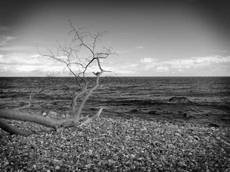 Blue sky above sea level. Fallen tree on stony coastline