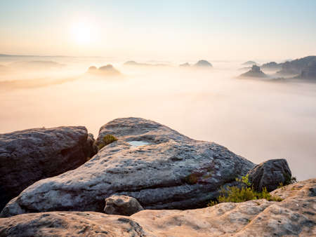 Landscape misty panorama. Deep valley full of pink mist. Fantastic dreamy sunrise above fairy misty valley named Grosser Zschand.