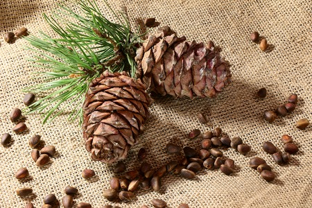 purified: Siberian Pine nuts and  branches Stock Photo