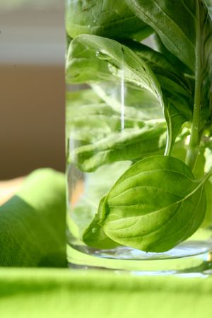 Basil in a bottle infusing spring water for cooking Banco de Imagens