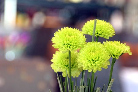 A posy of mums at an outdoor cafe Stock Photo - 2307465