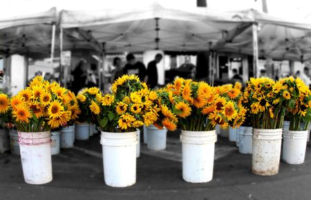 Sunflowers at the Farmers Market