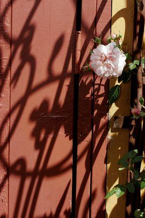 Victorian Roses Stock Photo - 2307582