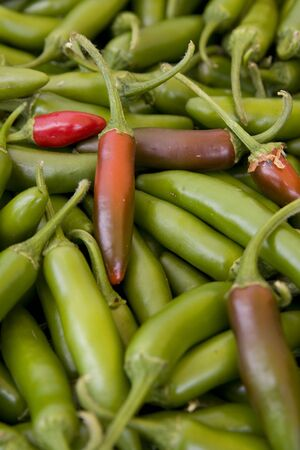 epicure: Fresh, organic, locally grown San Diego produce.