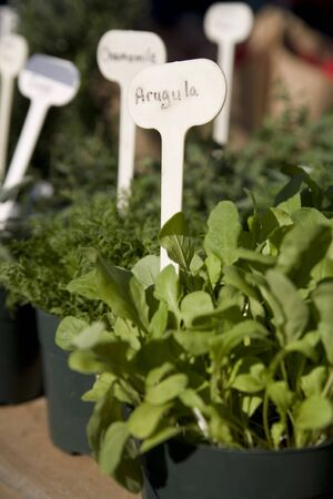 Potted herbs at the farmers market Imagens