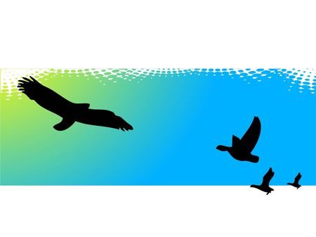 flying birds on abstract background