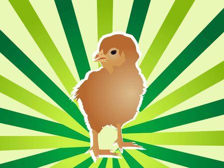 chicken on striped background   photo