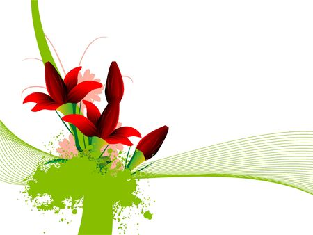 attractive flowers on isolated background   photo