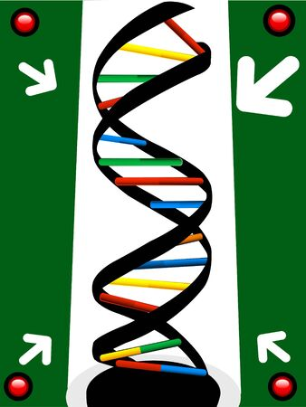 structure of dna and arrows   photo