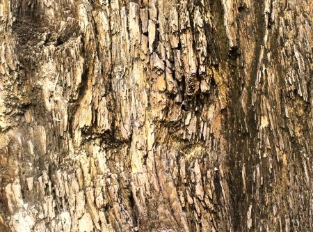 petrified: Surface of petrified wood Stock Photo