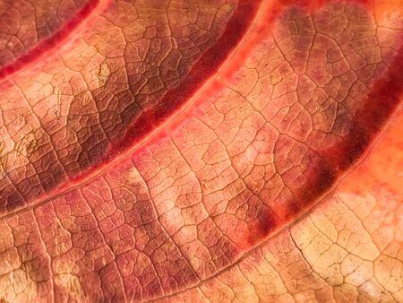 Brown leaf texture, leaf Background.