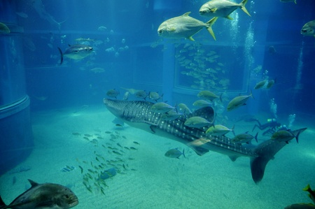amazing fishes swimming in Japanese ocean park photo