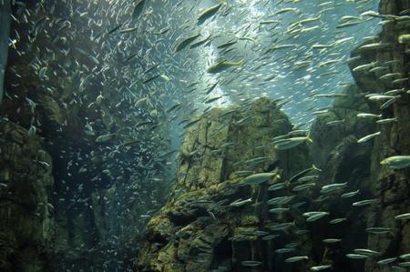 pez pecera: peces incre�ble nadar en japon�s Ocean Park