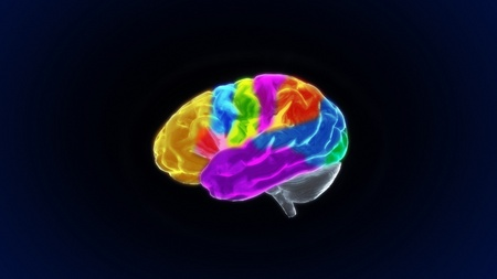 the crystal brain render for medical and biology concept Stock Photo - 12403233