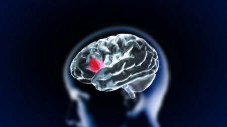 brain works: the crystal brain render for medical and biology concept Stock Photo