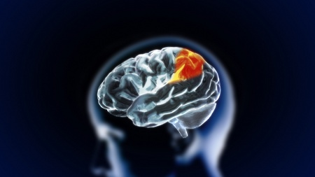 the crystal brain render for medical and biology concept Stock Photo - 12403409