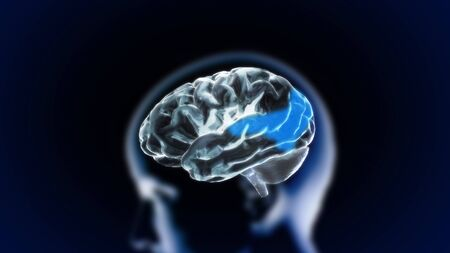 the crystal brain render for medical and biology concept Stock Photo - 12403401