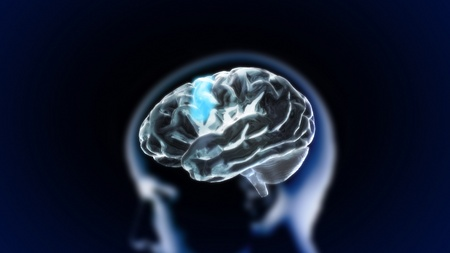 the crystal brain render for medical and biology concept Stock Photo - 12403402