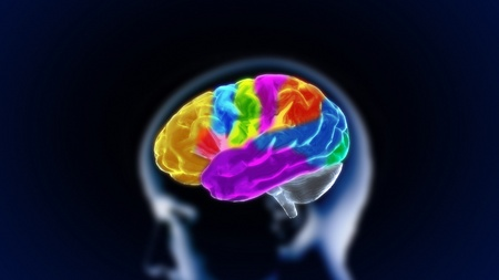 brain function: the crystal brain render for medical and biology concept Stock Photo