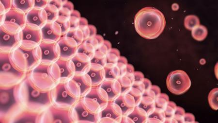 multiplicaci�n: Resumen ilustraci�n de las c�lulas en mitosis y la multiplicaci�n de las c�lulas para la belleza y la biolog�a concepto