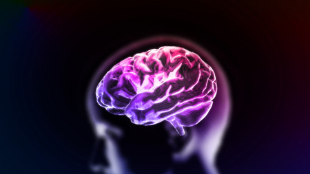 the crystal brain render for medical and biology concept Reklamní fotografie