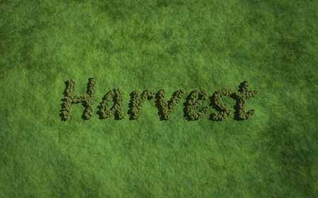 harvest background: harvest text tree with grass background concept of typography