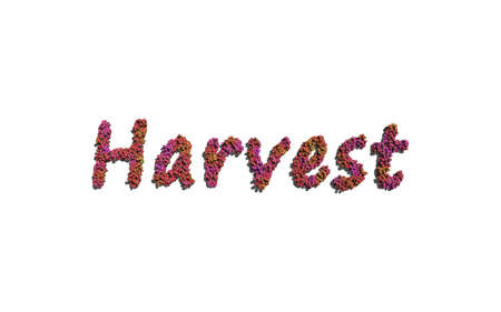 harvest background: harvest text flower with white background concept of typography