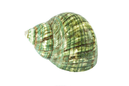 green seashell isolated on white background