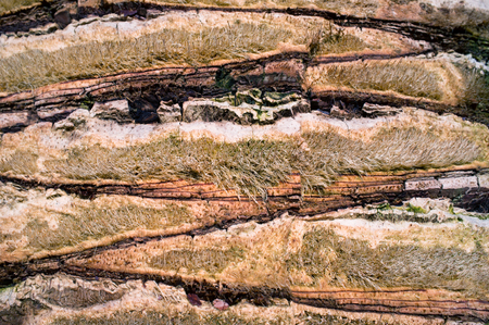 detail of a palm bark photo