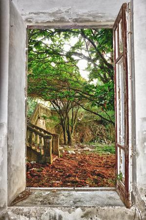 hdr green garden through window photo