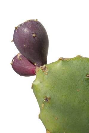 prickly pear isolated on white background Stock Photo