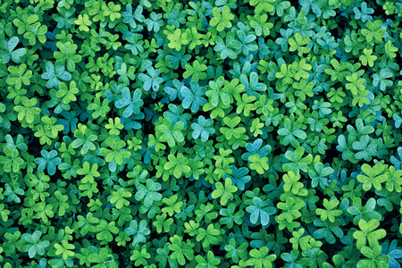 Two Colors blue green clover background