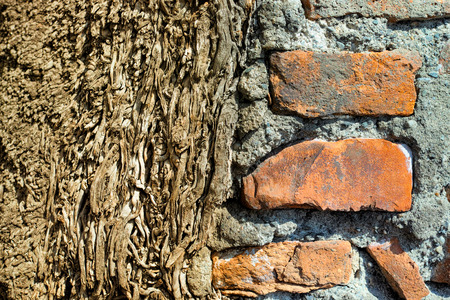 wall in cement and bricks propped on a tree trunk Stock Photo