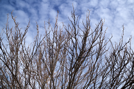 Bare branches in winterunder cloudy sky