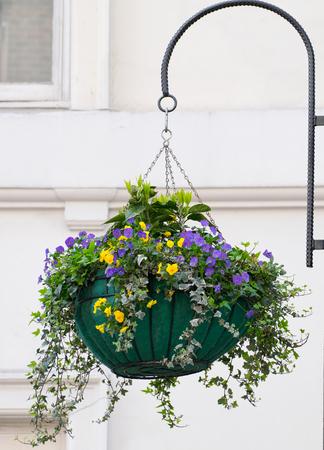 beautiful hanging flower box under sunlight