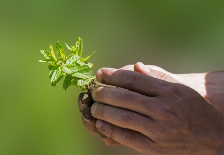 hands holding small green plant