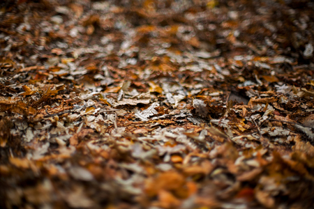 Autumn foliage, strong bokeh