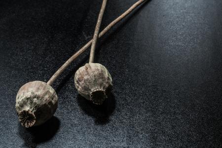 Cabeza de amapola seca sobre fondo negro oscuro. Plantas de opio