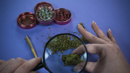 The person looks at marijuana bads with magnifying glass. Cannabis. Joint and weed on the background Banco de Imagens