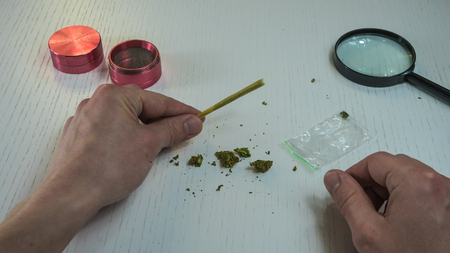 Preparing and rolling marijuana cannabis joint. Person hold marijuana joint in his hand