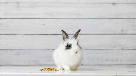 Close-up of cute white bunny is eating dry rodent food mix on wooden background. Balanced feed with cereals, seeds, peas, dried vegetables. Concept of balanced food for rodents Foto de archivo
