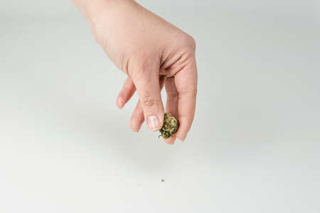 Close-up of females hand holding marijuana bud on white background. Cannabis is a concepts of alternative medicine and herbs