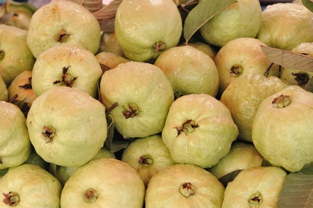 Guava fruit  in thailand photo