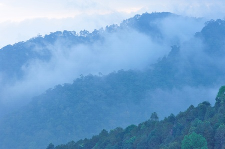 range of motion: Tropical mountain mist in thailand