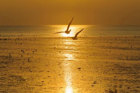 View beautiful  Sunset beaches   in  samutprakarn Thailand photo