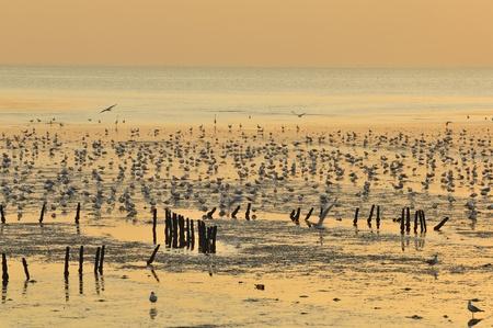 samutprakarn: View beautiful  Sunset beaches   in  samutprakarn Thailand