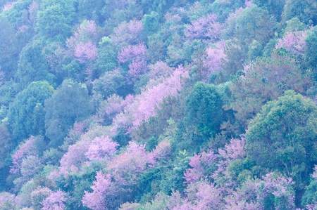Natural  forest   in  Chiang thailand     photo