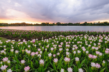 Beautiful sunset tropical landscaped in garden Stock Photo - 22694727